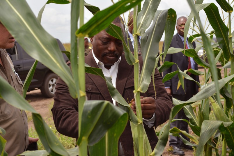 Congo President Joseph Kabila inspects corn produced with the help of South African farmers taking part in a agriculture project between the two countries in  Bandundu Province, Democratic Republic of Congo, Thursday, March 5,  2015. The agriculture project forms part of the Republic of Congo's plans to create food security by creating special agricultural zones in the country.  (AP Photo/John Bompengo)