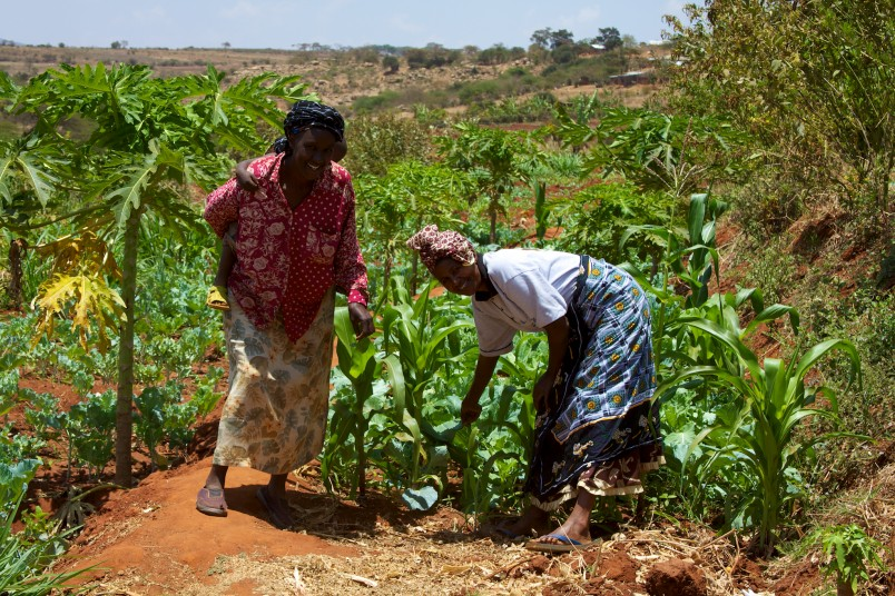 Lessons from Kenya on how technology is helping smallholder farmers