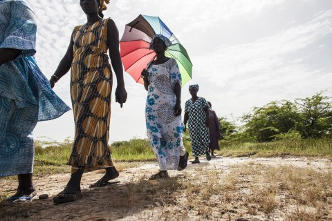 In this photo taken Monday, Oct. 19, 2015, women walk on farmlands that was destroyed by high salt content due to rising sea levels in Saloum Delta, Diamniadio Island in Senegal. Thousands of people on these tiny islands and villages in this part of West Africa are living on the frontline of climate change. Not only are water levels here now higher than they used to be, droughts and erratic rain falls lead to floods that carve through the white-shell-lined alleyways, and increased salt levels are poisoning the fresh waters, land and agriculture. (AP File Photo/Jane Hahn)