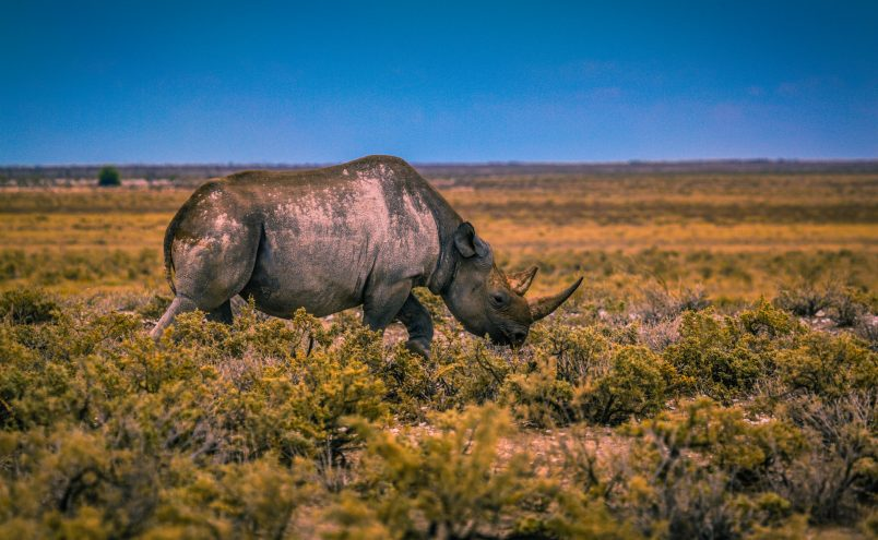 Planet Earth II – The Poaching behind the Scenes