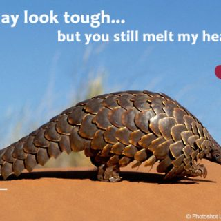 Google Valentine Doodle feels the 'pangolin love' – and you can send some too