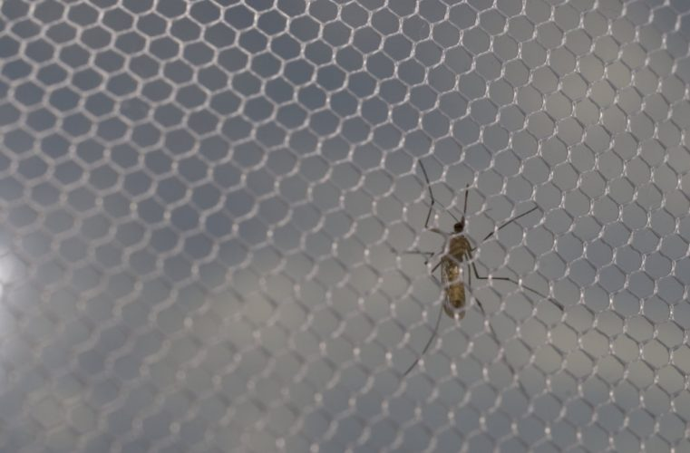 15 New Deaths Reported As Namibia Angola Battle Malaria