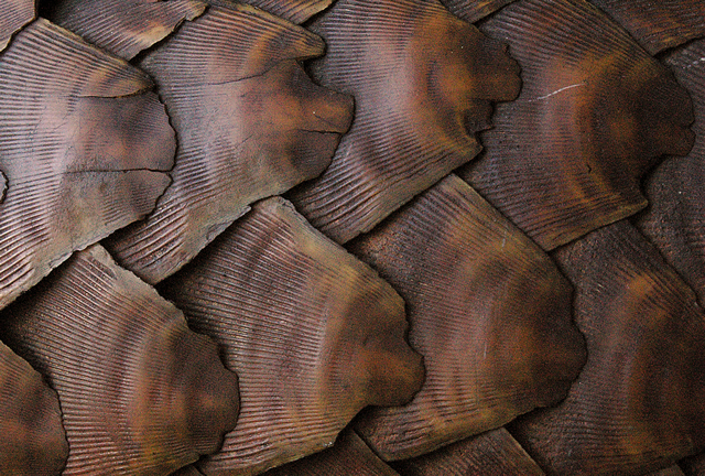 Pangolin scales shipped from Ghana seized by Malaysian officials