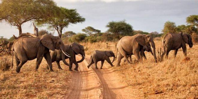 Botswana: Nine elephants electrocuted while seeking water