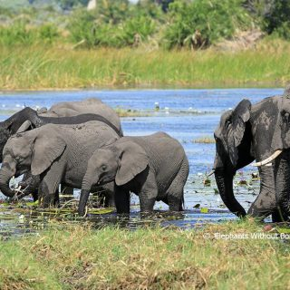 U.S. reversal on African elephant trophy ban meets with activist anger