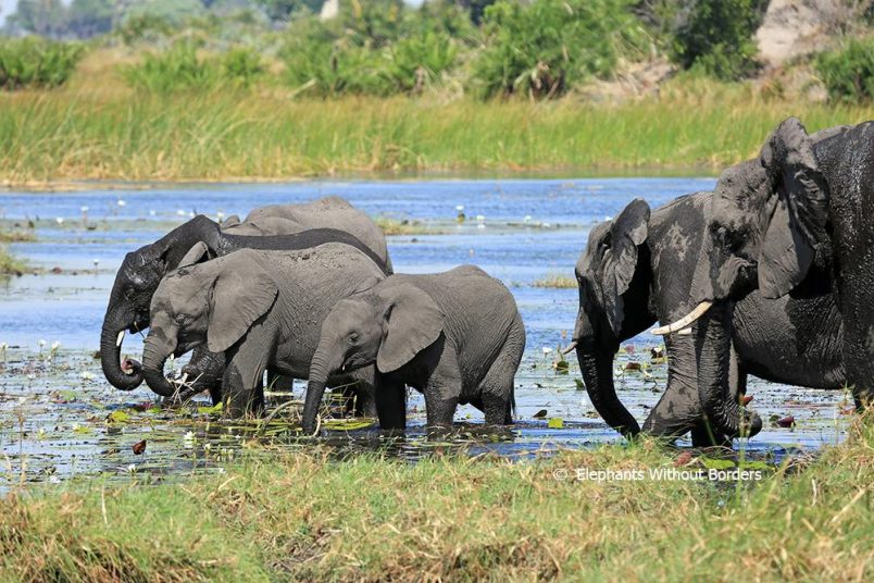 U.S. reverses elephant trophy policy, again, after conservation activist backlash