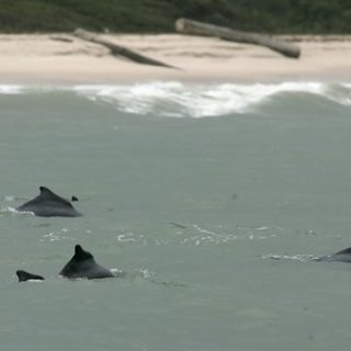 Wildlife groups say West African dolphins now critically endangered
