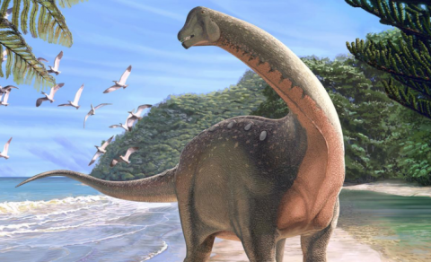 Paleontologists find new dinosaur species in Sahara
