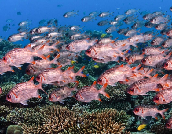 Seychelles swaps its debt for designated marine conservation investment