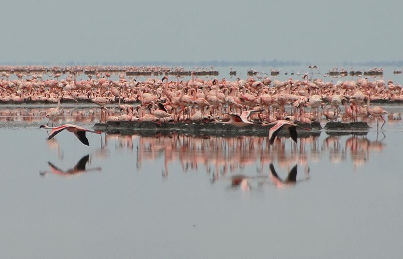 IPBES report shows critical need to protect Africa's biodiversity