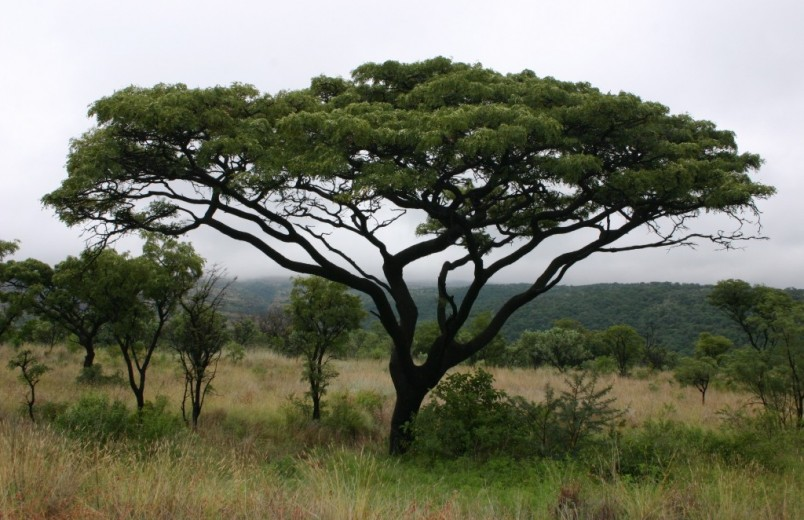 How Africa can fight climate change by saving trees