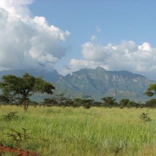 Uganda's sugar industry in danger of implosion