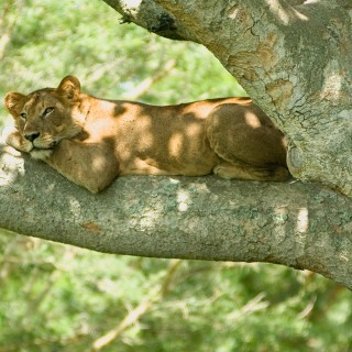 New wildlife research makes case for funding African parks