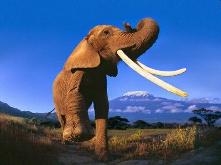 Botswana holds firm on ivory trade ban at CITES