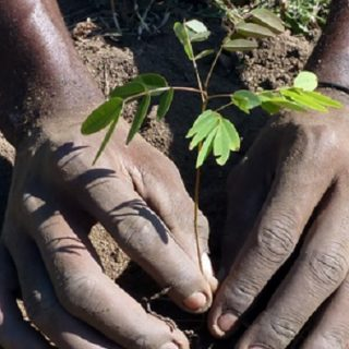 Malawi soldiers say 4-year logging ban needed to save Chikangawa forest