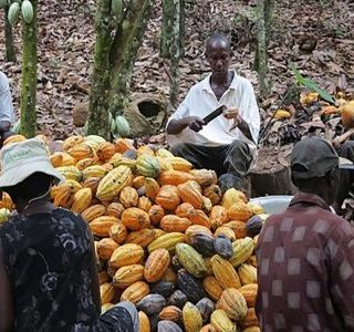 Agribusiness in Africa: Unlocking the business potential of smallholders