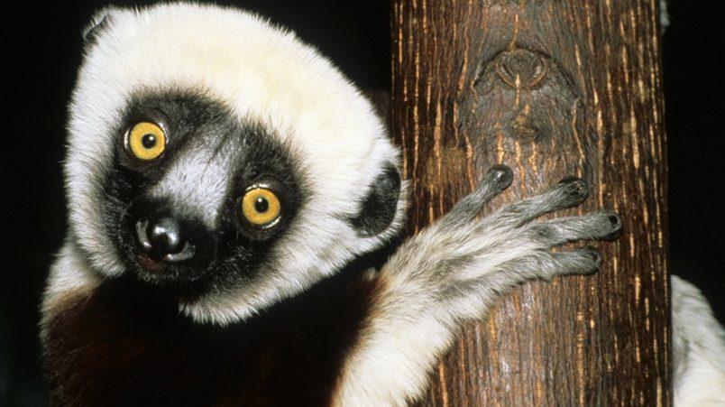 Honoring World Wildlife Day, from Gabon wetlands to the Sinai Desert