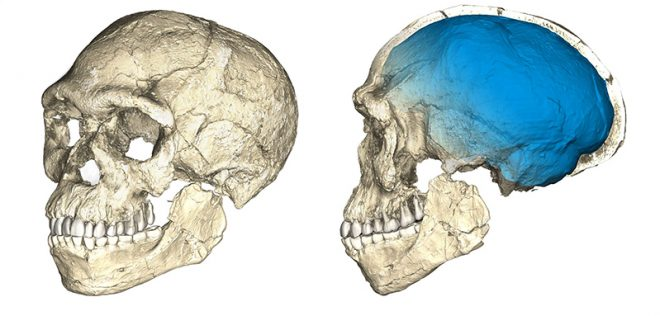 Scientists say fossils in Morocco change known history of Homo sapiens