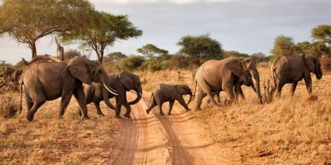 Botswana named top African safari tourism destination