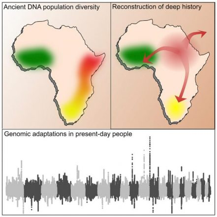 Harvard DNA study offers new insights on African genetic history