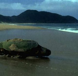 Eritrea says sea turtle conservation, coastal protection is paying off