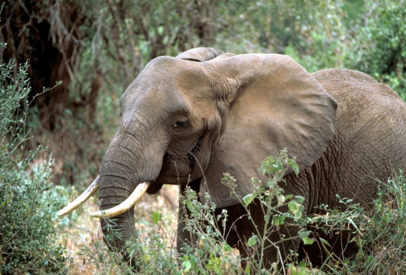 Botswana disputes account of 90 elephant poaching deaths
