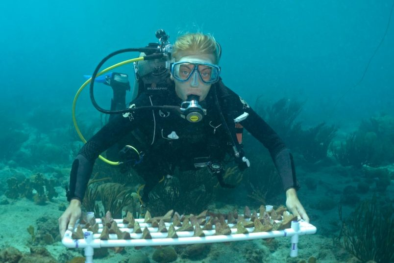 For nations like Seychelles, new coral restoration technique may boost success