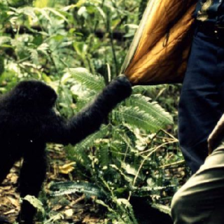 DRC: Militants release 27 abducted from Kahuzi-Biega National Park