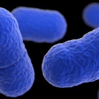 WHO working with 16 countries in wake of SA listeriosis outbreak