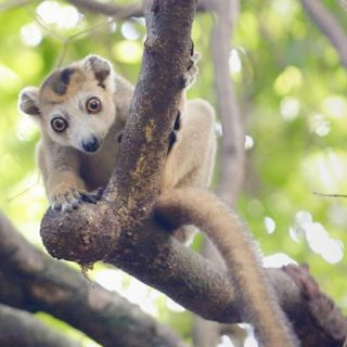 Study: Madagascar's conservationists need better access to research