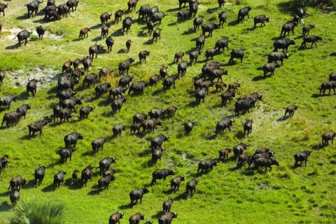 U.S. legislators advance Okavango River Basin wildlife protection