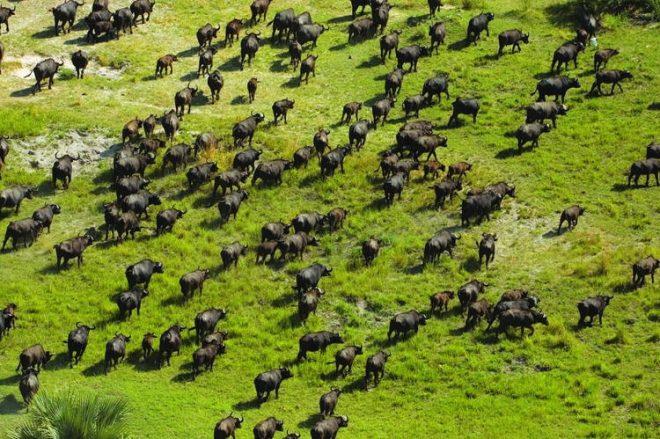 U.S. legislators advance Okavango River Basin wildlife protection