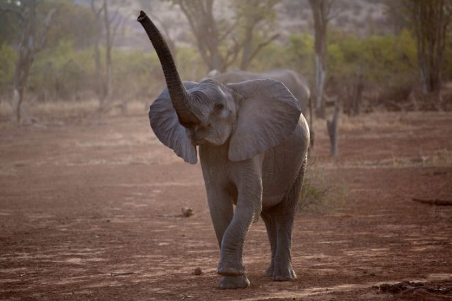 Project moves elephants from South Africa to Mozambique