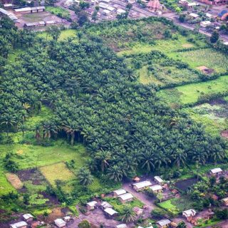 African land study: Hard to balance palm oil with biodiversity protection