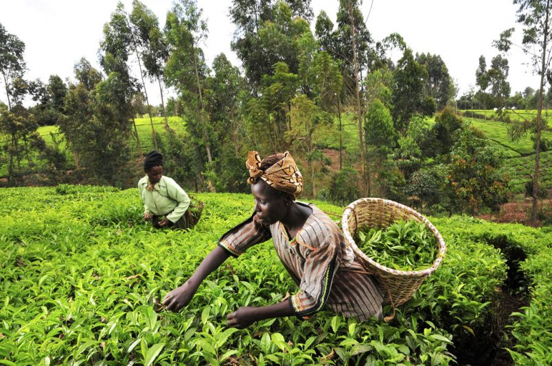 Mitigating COVID-19's impact on Africa's food systems