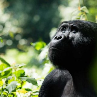 Angola launches new wildlife protections to curb poaching