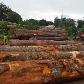 Africa's micro firms are key to sustainable wood trade