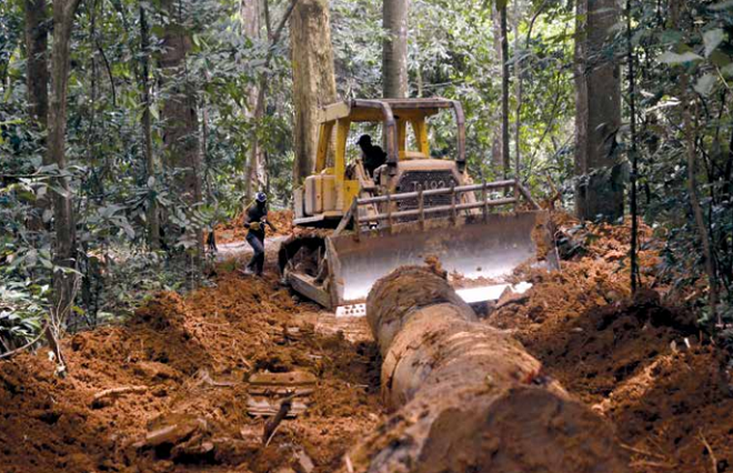 Report finds Chinese firms linked to illegal logging in Gabon, Congo