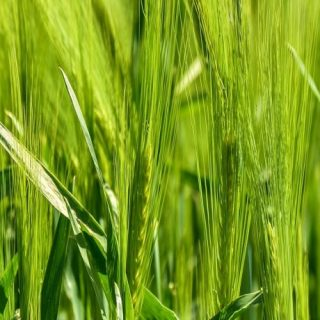 Zimbabwe to begin compensation for land-reform farmers