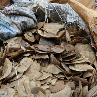 Singapore seizes illegal pangolin scales worth $38.7 million
