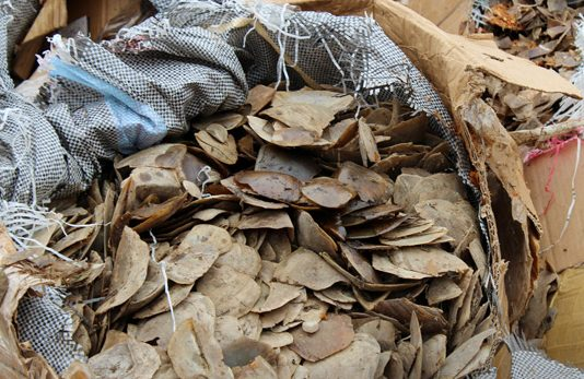 Singapore seizes another huge pangolin shipment from Nigeria