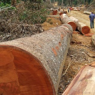 Report: DR Congo military leader involved in illegal timber trade