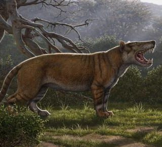 Kenya museum fossils lead to giant carnivore discovery