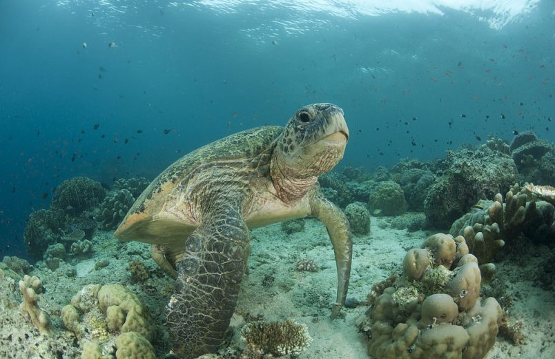 Scientists appeal to Rajoelina to protect Madagascar's biodiversity