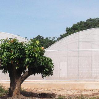Burkina Faso research may prove a malaria breakthrough