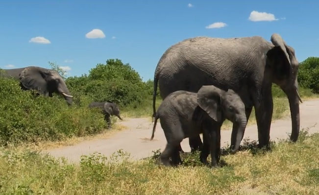 Namibia's drought forces wildlife auction