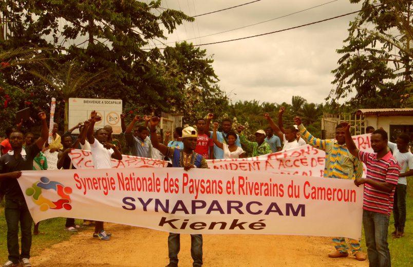 Bolloré faces lawsuit over Cameroon palm oil workers