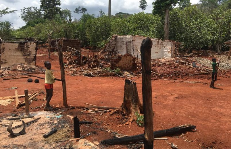 HRW: Côte d'Ivoire deforestation policy threatens small cocoa farmers