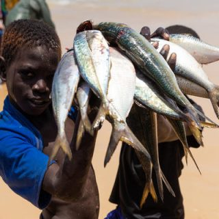 Report: West African food security threatened by fishing industry practices