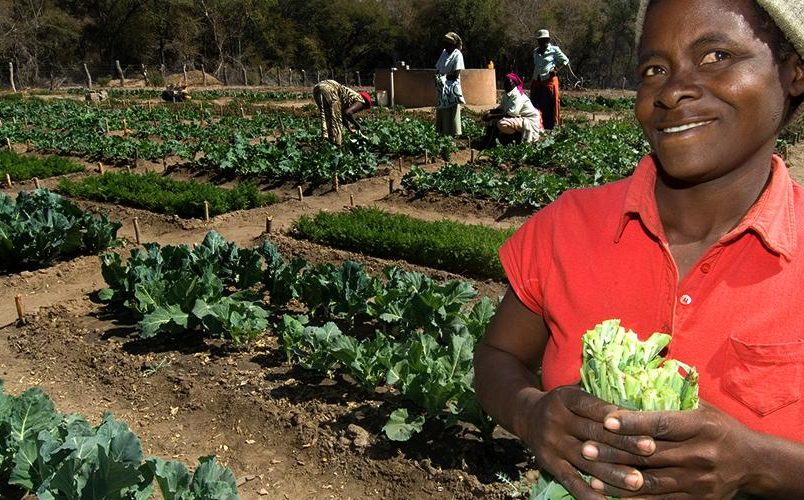 WHO focuses on food safety to reduce preventable deaths